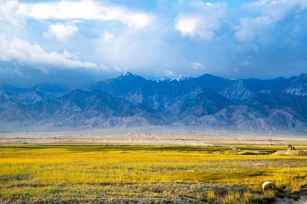 landscape, gold, agriculture